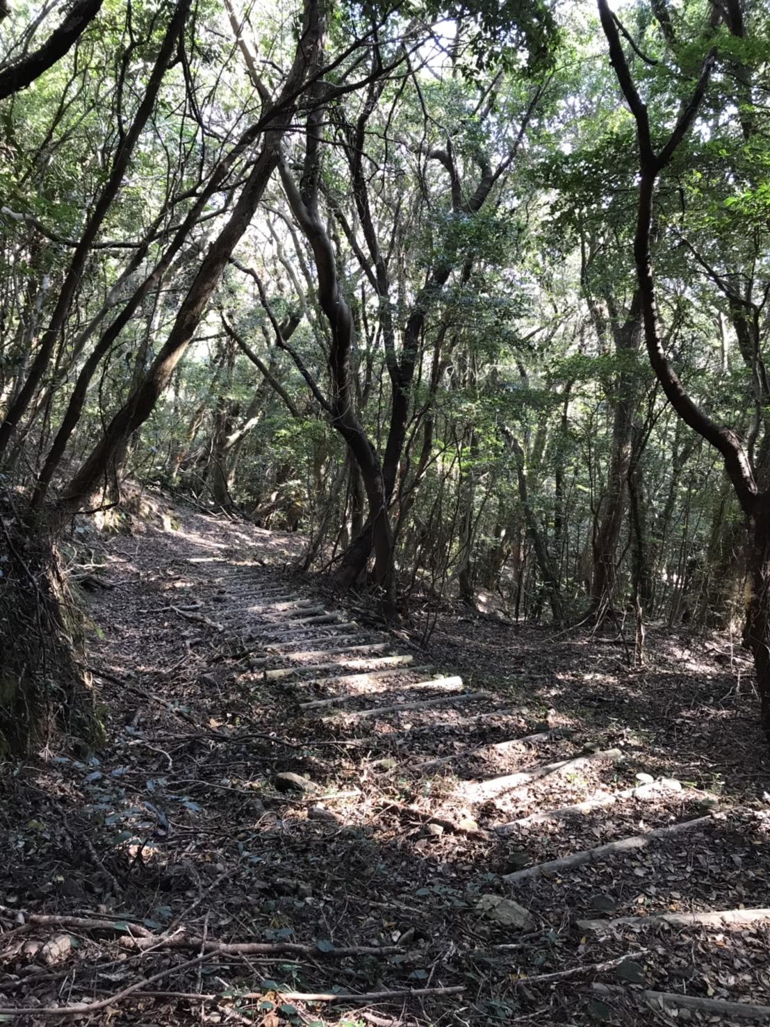 城ヶ岳木漏れ日