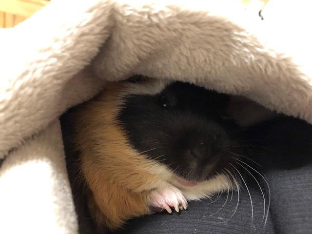 着る毛布3