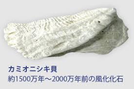 カミオニシキ貝