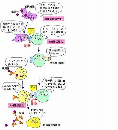 T細胞 漫画