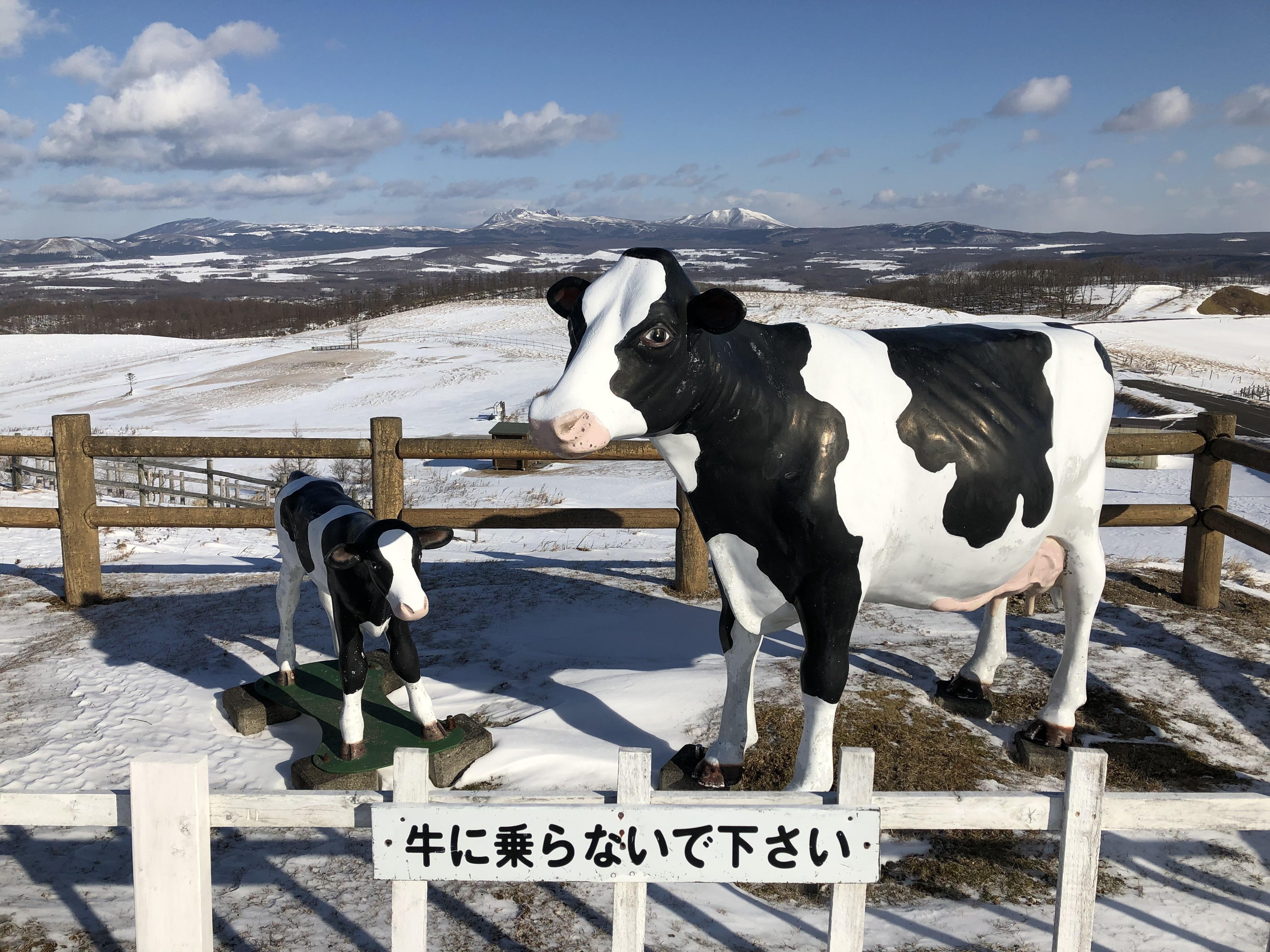 牛に乗らないでください