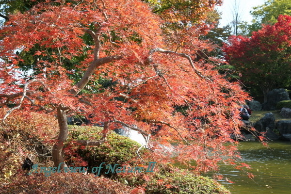桜山公園の日本庭園1811037781①