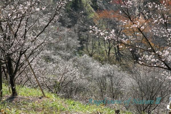 桜山公園1811037711①