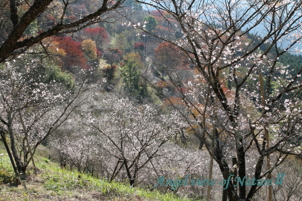 桜山公園1811037715①