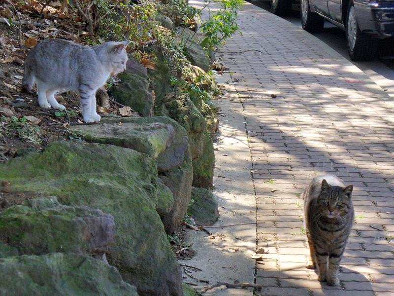 遊歩道と猫たち