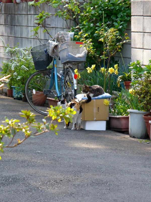 住宅街の猫ハウス1