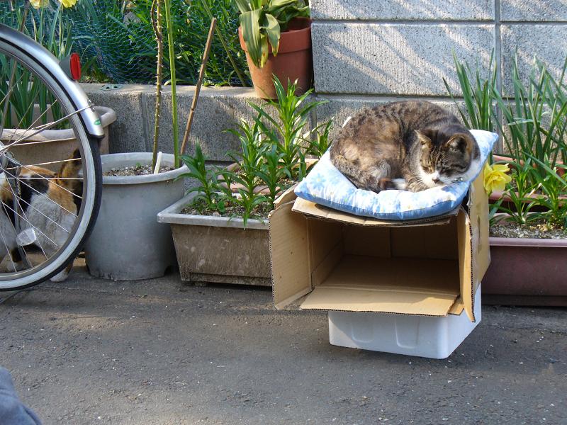 住宅街の猫ハウス2