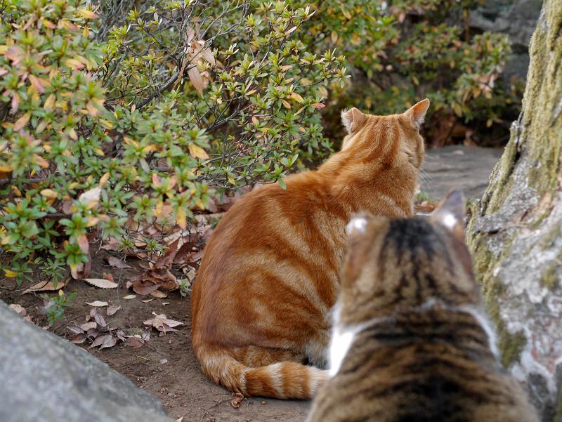 大きな猫2匹1