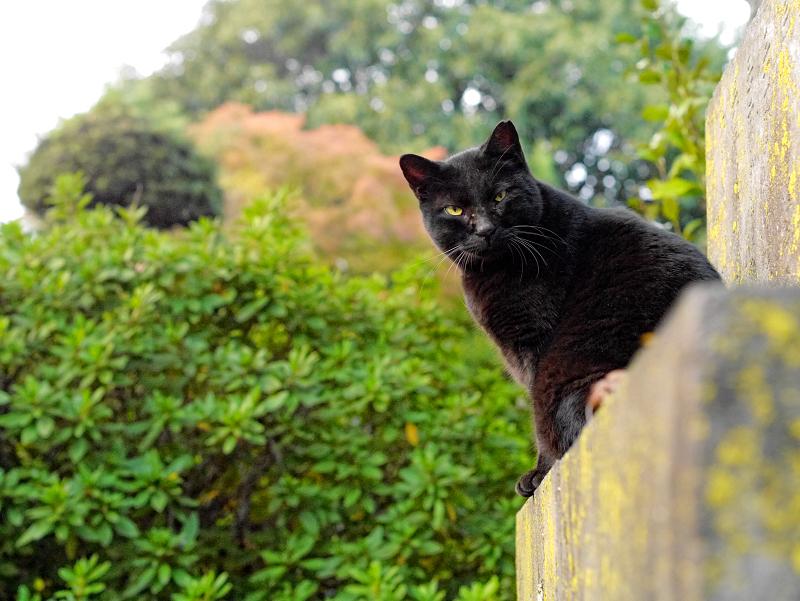 石碑と黒猫3