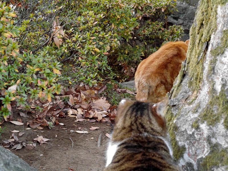 大きな猫2匹2