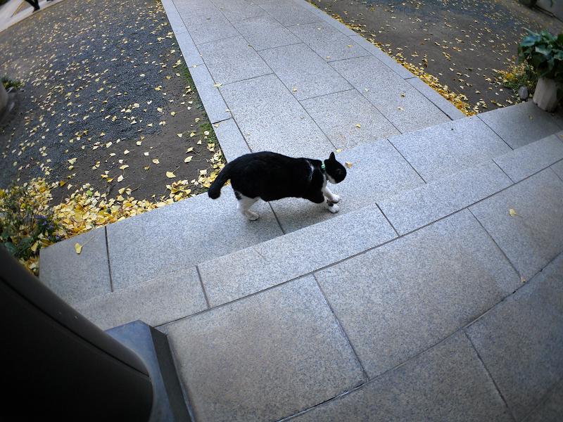 青白い境内と黒白猫2