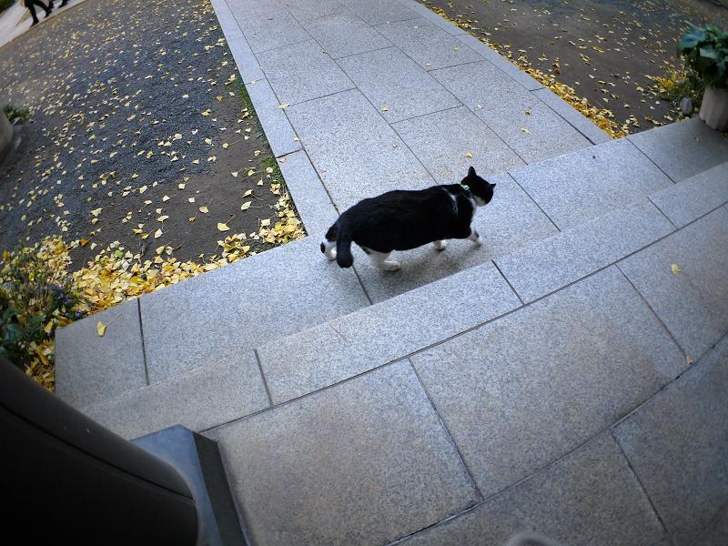 青白い境内と黒白猫3
