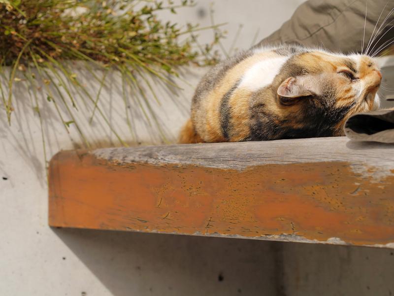 ベンチで気持ちが良さそうな三毛猫4