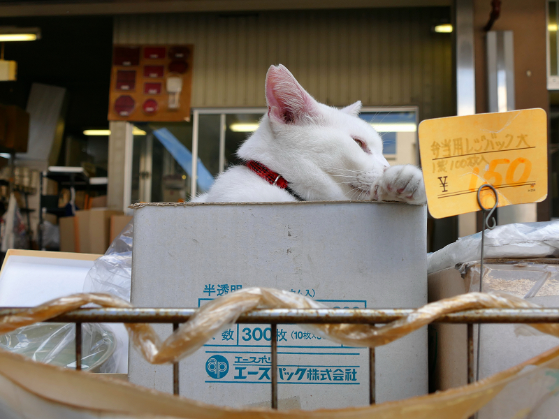 箱に入ってしまった白猫1