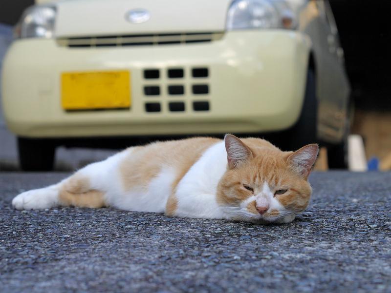 軽自動車の前の茶白猫2
