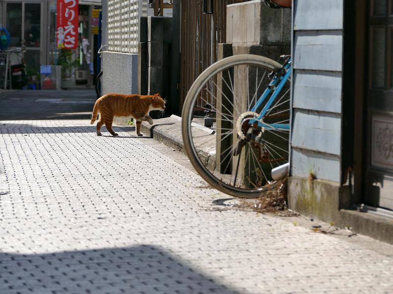 路地で出会った茶白猫2