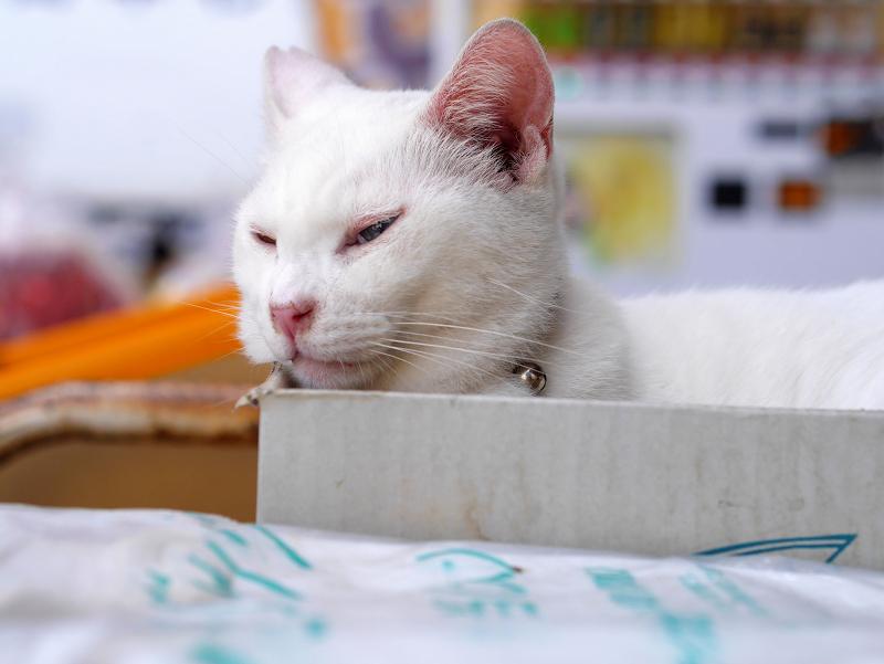 箱に入ってしまった白猫3