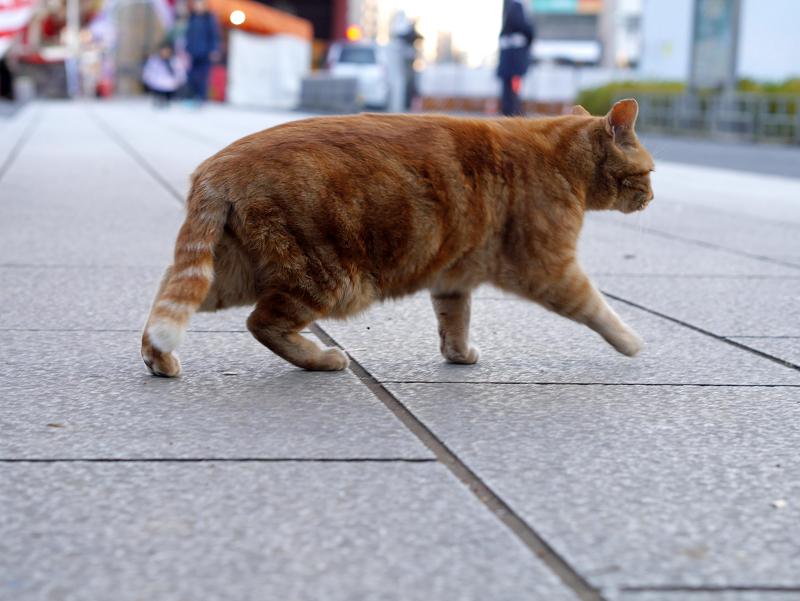 参道石畳を横切る猫1