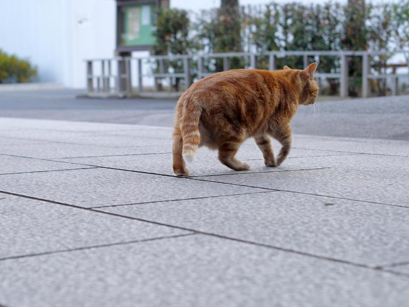 参道石畳を横切る猫2