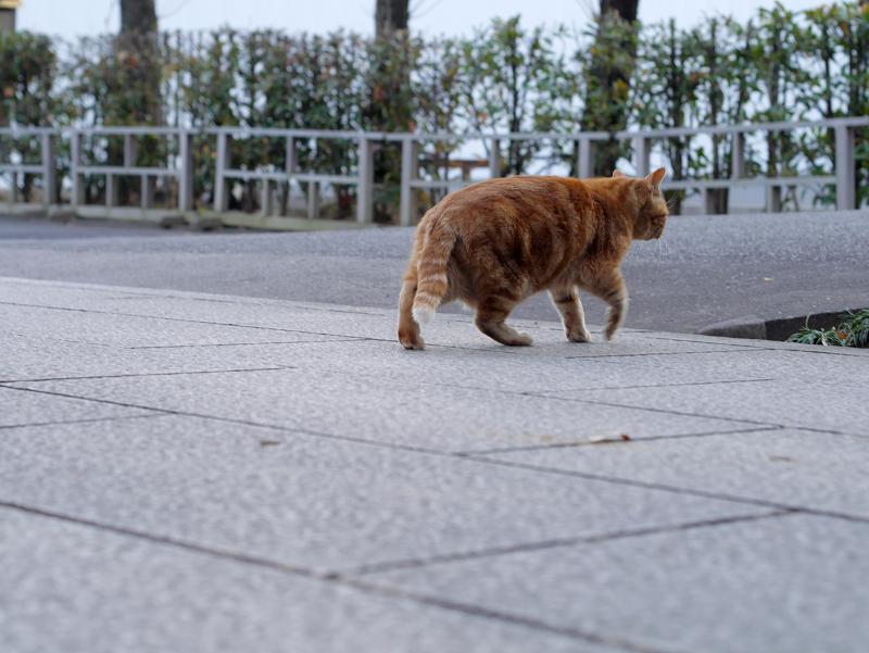 参道石畳を横切る猫3
