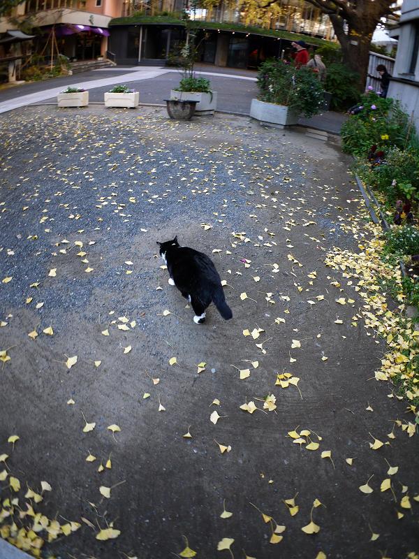 境内を歩く黒白猫1