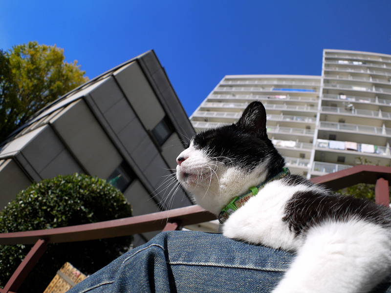 膝で寝てるに乗った黒白猫2
