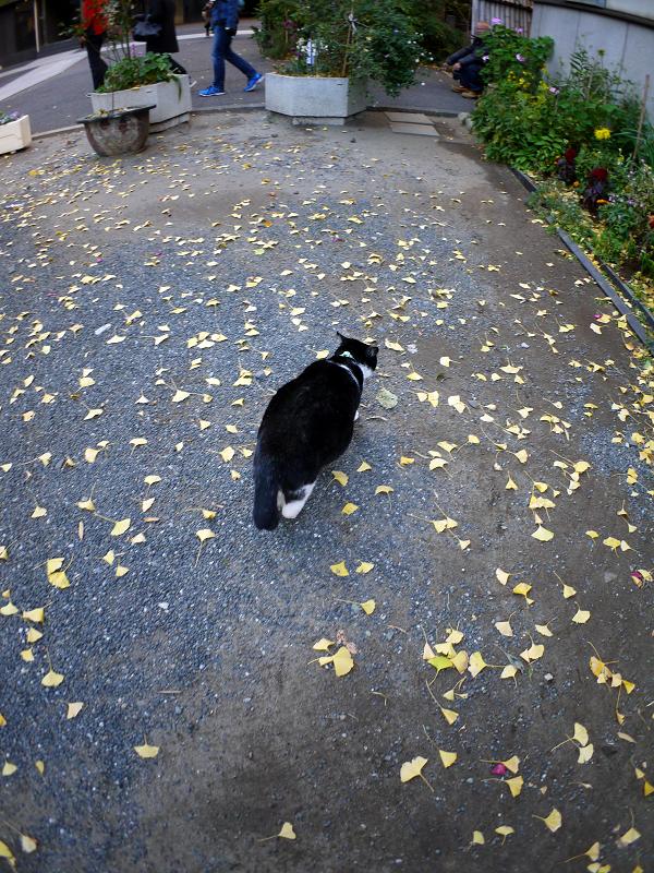 境内を歩く黒白猫2