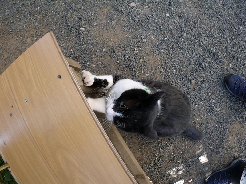 ベンチで爪研ぎする黒白猫2