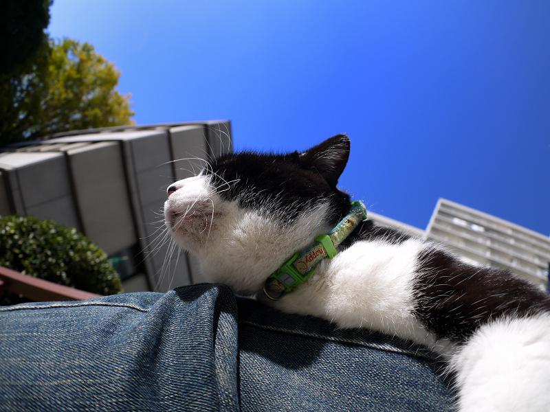 膝で寝てるに乗った黒白猫3