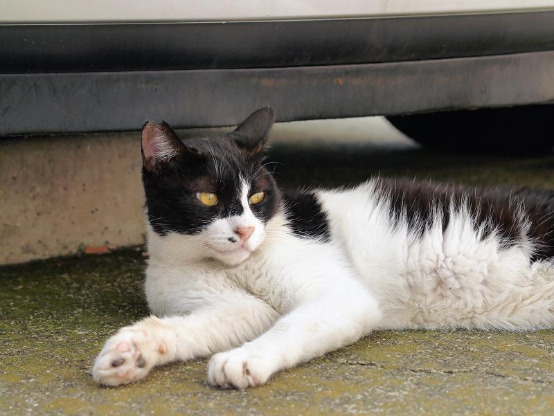 コンテナ前の黒白猫1