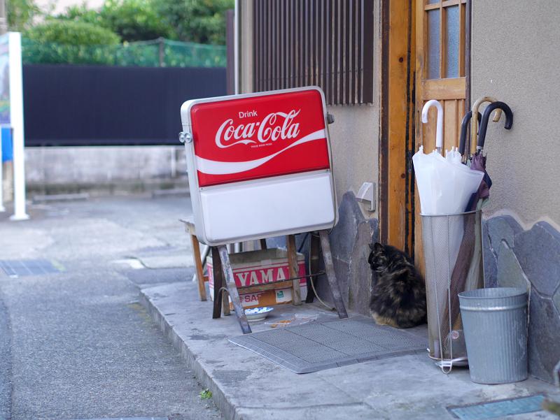 居酒屋の前の毛長猫1