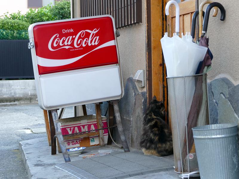 居酒屋の前の毛長猫3