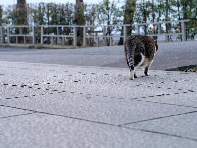 参道を渡る猫3
