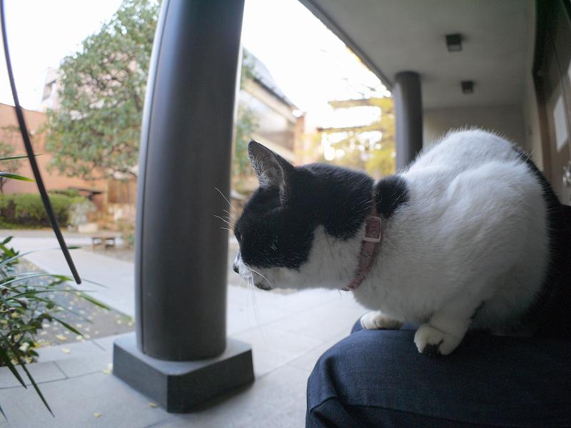 膝に乗って境内を見てる白黒猫1