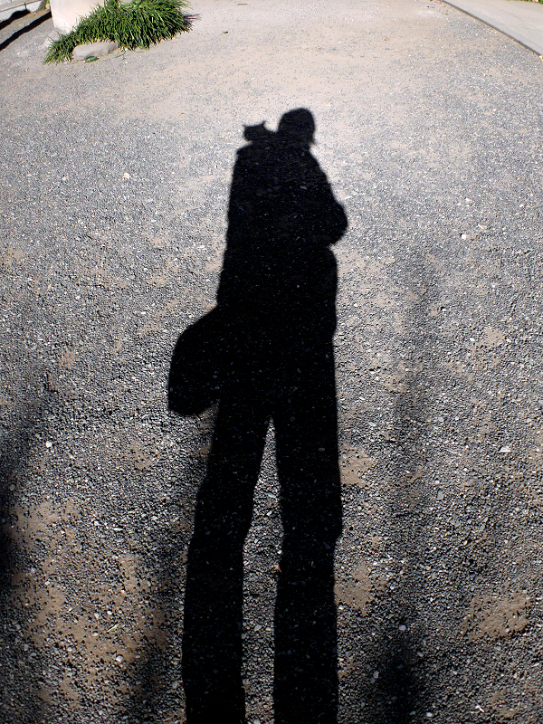 肩に乗った猫との影