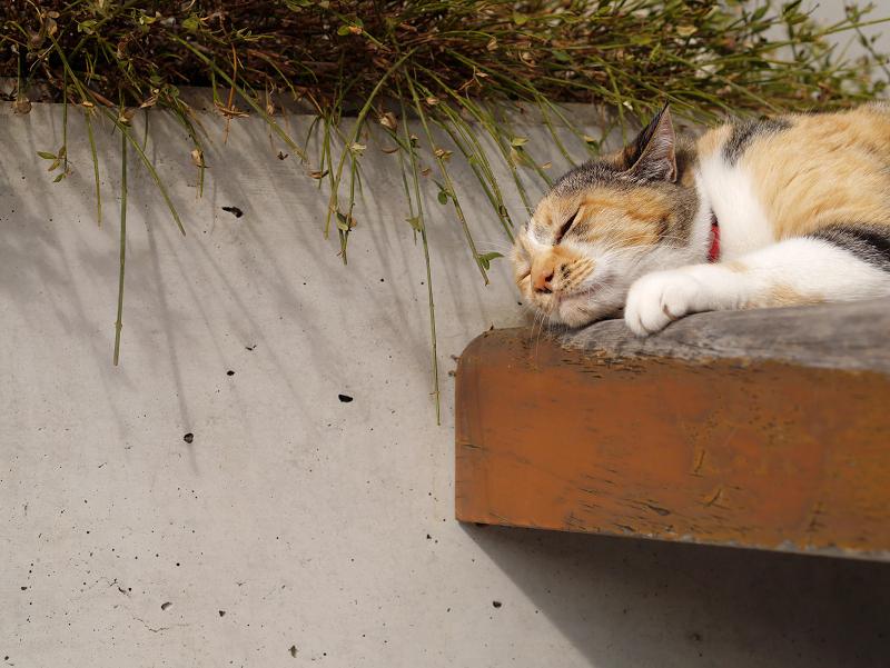 ベンチで悶絶三毛猫2