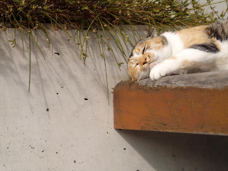ベンチで悶絶三毛猫3
