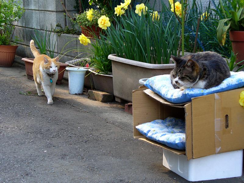 猫ハウスで出会う猫2匹1