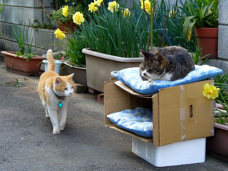 猫ハウスで出会う猫2匹2