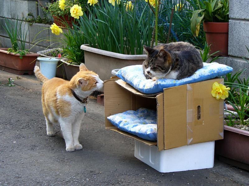 猫ハウスで出会う猫2匹3