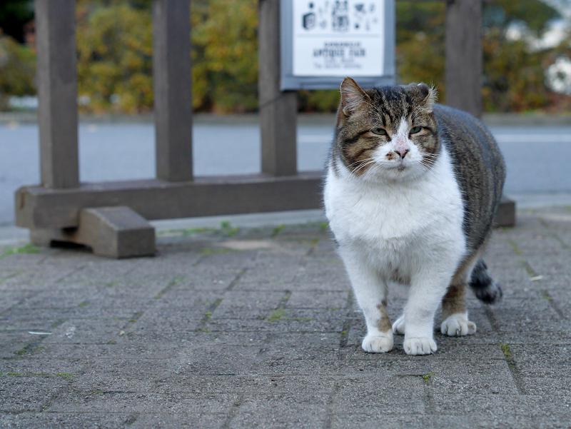 石畳のキジ白猫2