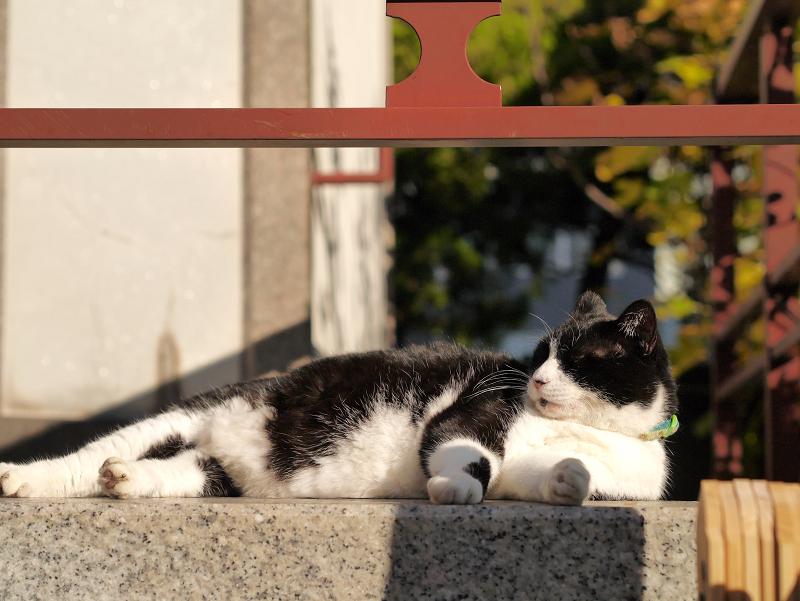 冬青空の下で寛ぐ黒白猫2