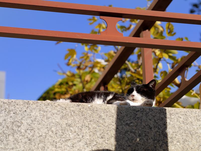 冬青空の下で寛ぐ黒白猫3