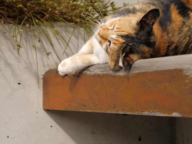 ベンチで恍惚三毛猫1