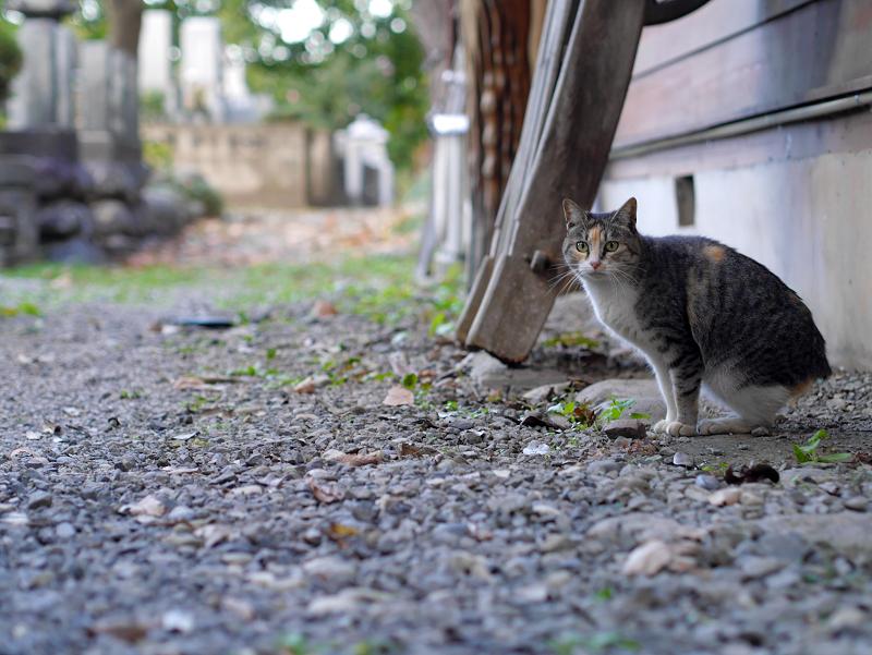 密かに鳴いてた三毛猫2