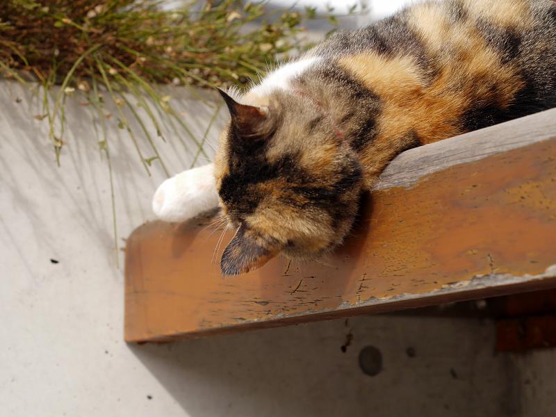 ベンチで恍惚三毛猫3