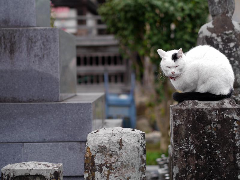 石碑と白黒猫3