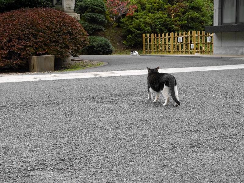 歩み寄って行く猫1