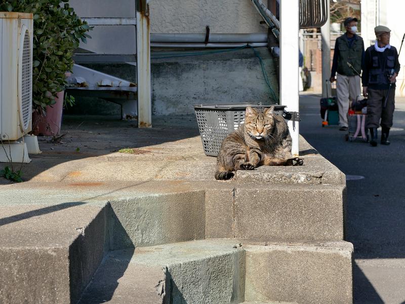 階段上で毛づくろいしてるキジトラ猫1