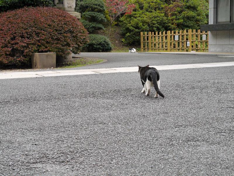 歩み寄って行く猫2